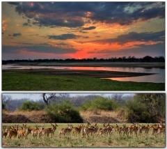 campsite Zikomo Safari